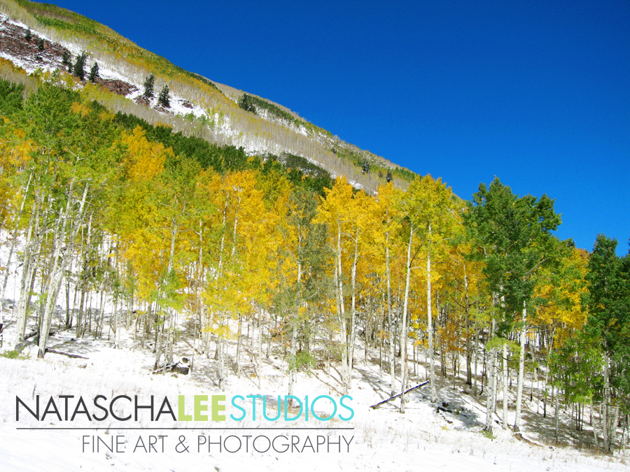 Colorado Aspens near Maroon Bells by Boulder, Colorado photographer Natascha Lee Studios