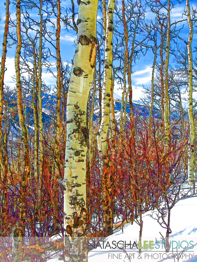 Aspens in the Snow – Natascha Lee Studios